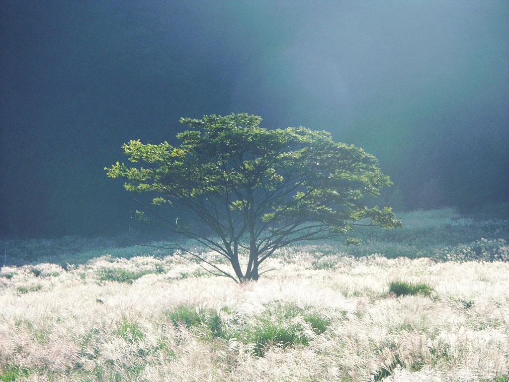 デスクトップ 風景写真壁紙 無料ダウンロード 草原の壁紙